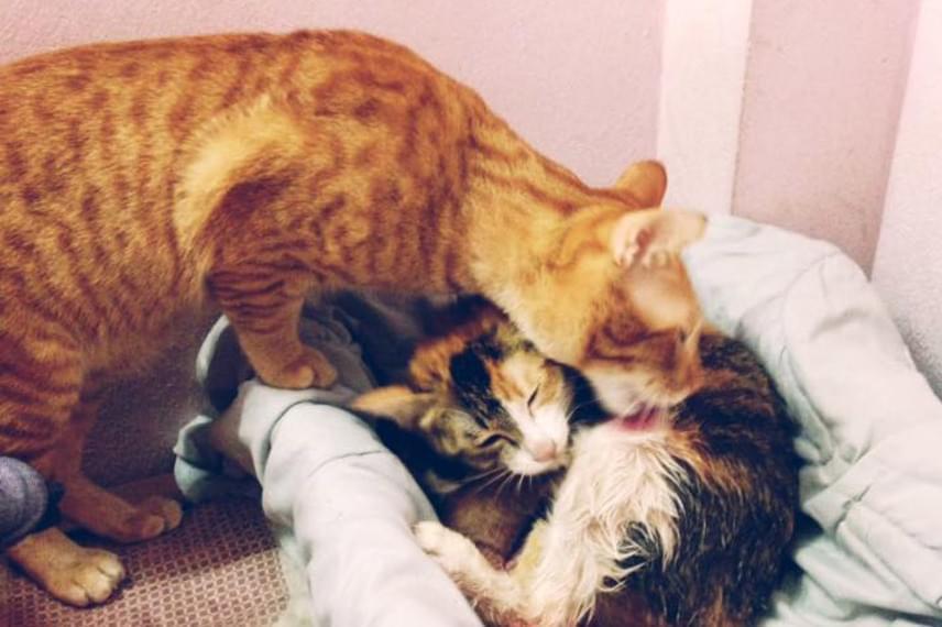 Yello a kimerítő szülés után azonnal gondjaiba vette párját, és szeretettel tisztogatni kezdte.