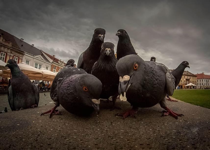 Mintha egy '90-es évekbeli rapalbum borítójához vennék fel a laza figurát ezek a galambok az utcán.
