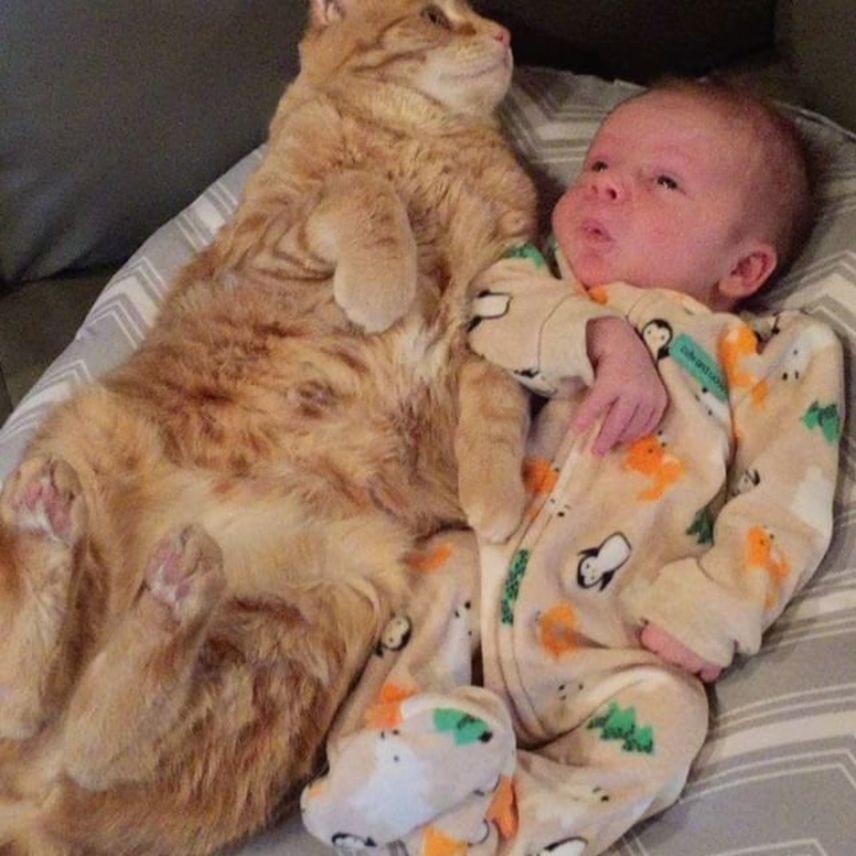 A gazdák elmondása szerint a cica egyébként is nagyon gondos figyelője a háznak, és imádja Sonny közelségét, ezért nem volt meglepő, hogy így reagált a betegségére. Szerencsére az apróság egy nap után felépült. Instagramonazóta is követhetőek a család bájos történetei.