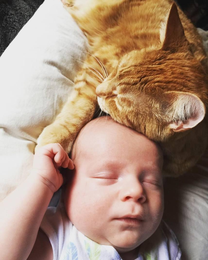 Mia ráadásul egész nap a beteg Sonny mellett feküdt, figyelve a baba minden rezdülését egészen addig, amíg meg nem bizonyosodott arról, hogy a kicsi valóban jobb állapotban van.