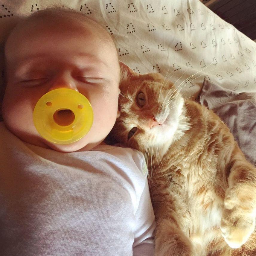 A macska rögtön megérezte, hogy valami baj történt kis barátjával, odaszegődött hozzá, és egy pillanatra sem tágított mellőle. Amikor az édesanya felvette, hangosan nyávogott, gondját viselve a picinek. Sokan egyébként úgy tudják, a cica további veszélyt jelent a babák egészségére, ez azonban nincs így.