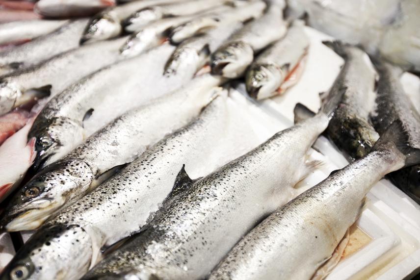 Tengeri hal - a tengeri és édesvízi halak egyaránt tartalmazhatnak higanyt, főleg, ha szennyezett vízből halásszák őket. A tavakban élő halak higanykoncentrációja körülbelül 0,2 milligramm kilogrammonként, az egészségügyileg elfogadott határérték pedig 1 milligramm/kilogramm. A kardhalban, makrélában, csukában és pisztrángban a legmagasabb a higanytartalom. Az üzletekbe kerülő halak higanytartalma a határérték alatt van, ezt rendszeresen ellenőrzik is. A higany felhalmozódásának elkerülése érdekében viszont érdemes óvatosnak lenni, és mértékkel fogyasztani a legrizikósabb típusokból.