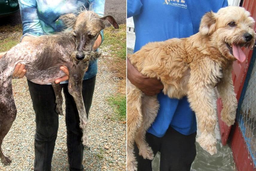 Csontsoványan, kihullott szőrrel került az állatmentőkhöz, ma viszont már boldog kutyusként éli mindennapjait ez a kis szőrmók.