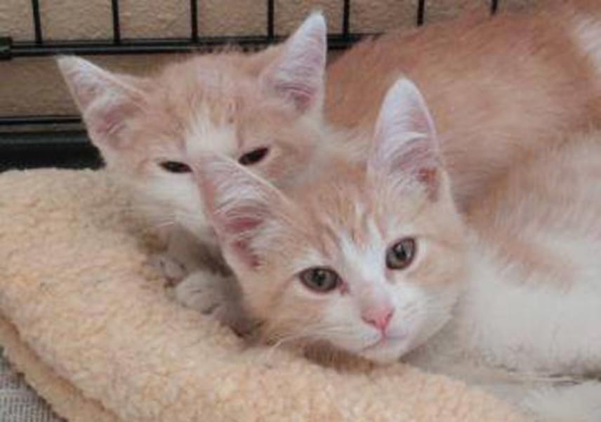 A különleges történetet a menhely is megosztotta a Facebook-oldalán egy tündéri fotó kíséretében, amelyen a cicák még együtt voltak.