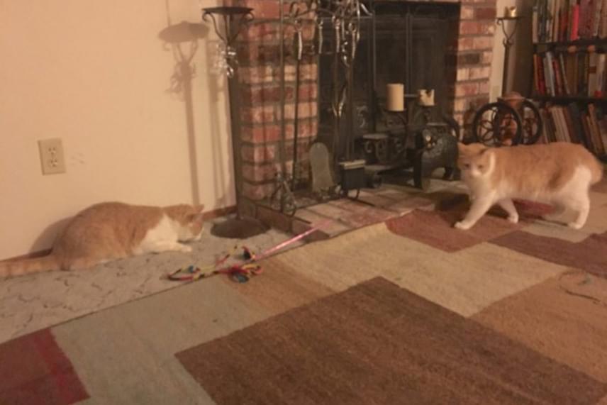Ozzy és Butter azóta újra találkoztak, és úgy játszanak együtt, mintha sohasem választották volna el őket egymástól.