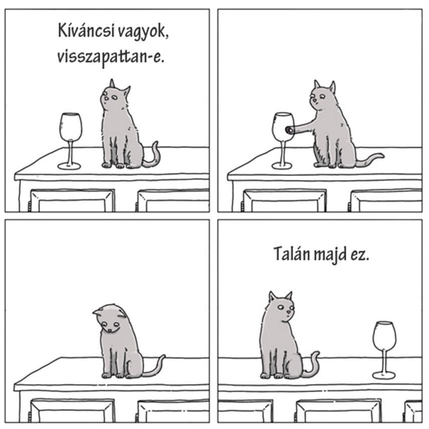 Sokan félreértik a macskákat.