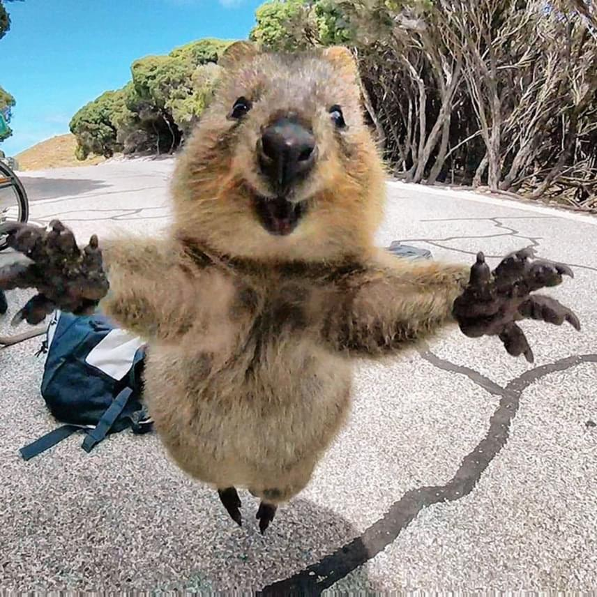 A kurtafarkú kenguru úgy vetette rá magát a fiatalemberre, mintha évtizedek óta a legjobb barátok lennének.