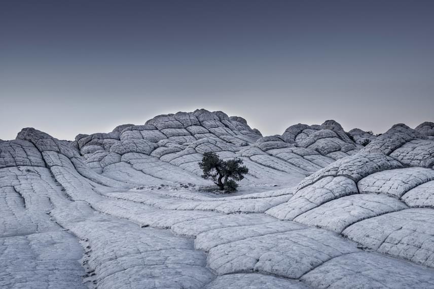 Magányos fa az arizonai Vermilion-sziklák egy nehezen megközelíthető részén, napkelte előtt. A fotót a német Tom Jacobi készítette, Tájkép kategóriában.