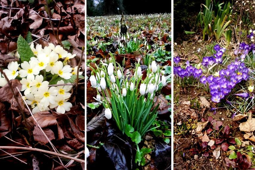 Az avarban már február végén megjelenik a közeli erdőben a hóvirág, míg később tőzikével, kankalinnal, krókusszal, sőt, a bakonybéli vizek környékén sárga nőszirommal is találkozhatsz. Március 11-én a Tavasz hírnökei túra keretein belül keresheted fel azokat a részeket a falu körül, ahol a legnagyobb számban nőnek a virágok.