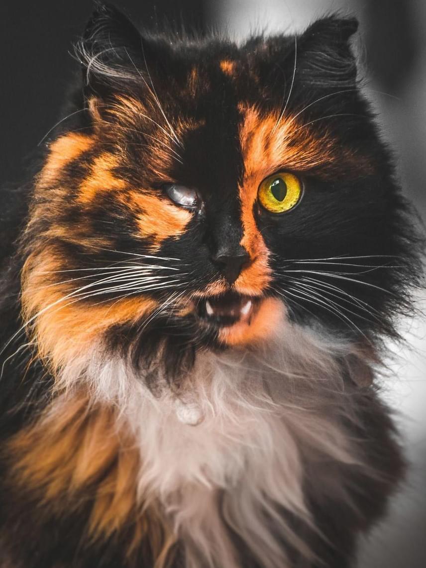 A fotóst mélyen megérintette, hogy ezek a macskák nem a megszokott, kedves, jól ápolt házi cicák. Mindegyikőjük igazi veterán és túlélő, aki nap mint nap küzd a betevő falatért.