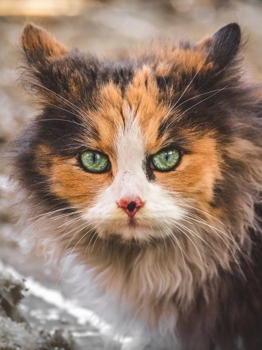 A fotóst főként a kóbor macskák tekintete ejtette rabul. Ha szeretnél még többet látni a két hónapos projekt képeiből, látogass el a Facebook-oldalára!