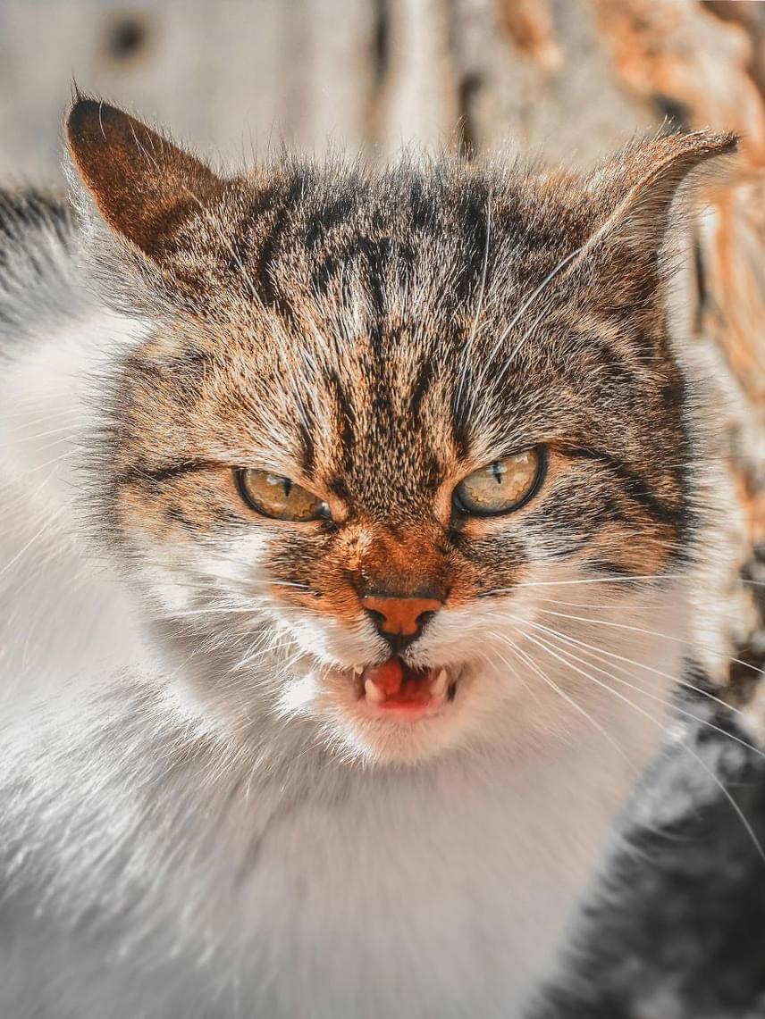 Mivel nincs, aki gondoskodjon róluk, a kóbor macskák kénytelenek az ösztöneikre támaszkodni. Ez azonban nem jelenti azt, hogy reménytelen lenne újra megszelídíteni őket.