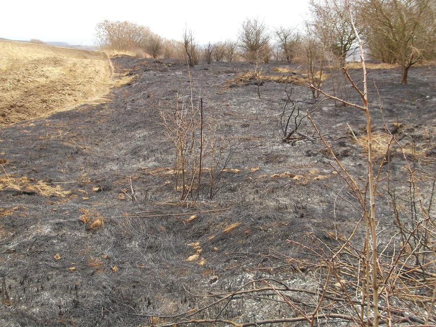 A végeredményt mi is megnéztük: szörnyen kiábrándító, hogy a környező lankák több tíz hektáron gyakorlatilag koromfeketébe borultak az elmúlt napokban. A látványnál még szomorúbb a tény, hogy ezzel a talajszint gazdag élővilágát is elpusztítják. A tetteseket ez idáig nem sikerült elkapni.