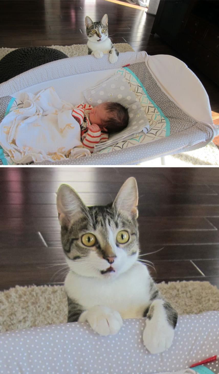 Ez a cica egyáltalán nem volt felkészülve az új jövevényre, aki a kiságyában édesdeden aludta álmát. Az első ijedtség után később persze összebarátkoztak.