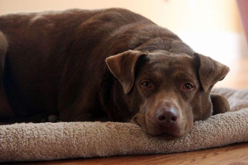 Ez a kutyus az egész életét az utcán töltötte. Miután örökbe fogadta a gazdija, először aludhatott bent - hálás tekintete pedig nem is lehetne beszédesebb.