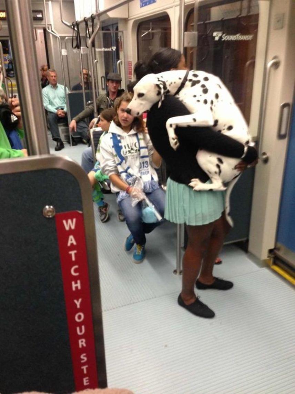 A metrózás sokszor még nekünk, embereknek is nagyon megterhelő tud lenni, hát még egy kutyának. A gazdija azért ott volt vele, hogy átölelje remegő testét, amíg ki nem szálltak a metróból.