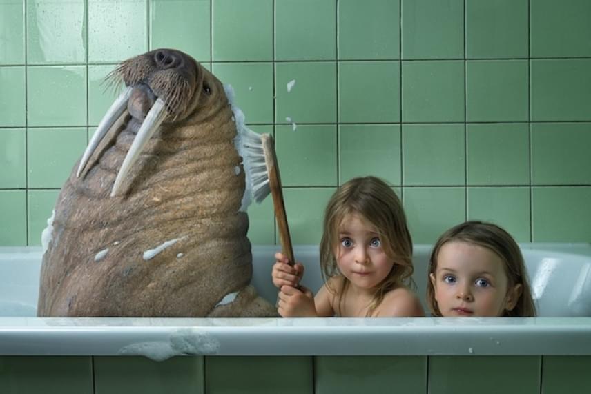 Egy újabb variáció a közös fürdésre, ám ezúttal egy hatalmas rozmárral kell megosztaniuk a kádat.