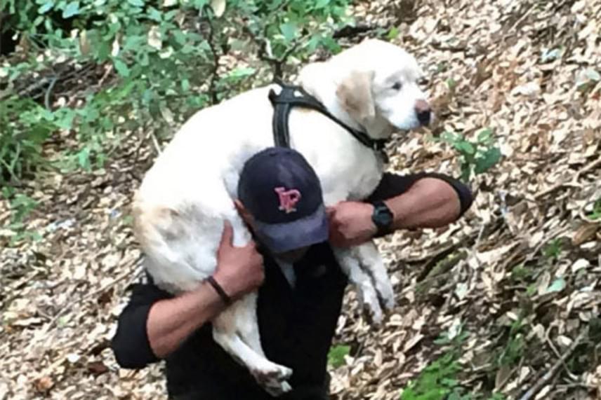 Sage-ben éppen csak annyi erő maradt, hogy az állát a víz felett tartsa, amikor a tűzoltó beugrott a vízbe, és odaúszott hozzá, hogy átölelje. A férfi elmondása szerint aznap esőre állt az időjárás, így valószínűnek tartotta, hogy a kutya nem élt volna túl még egy éjszakát az erdőben.