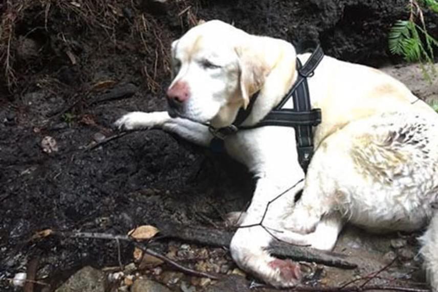 A kutyára egy szolgálaton kívüli tűzoltó, Dan Estrada bukkant rá, amikor a családjával túrázott. A férfi egy pataknál pillantotta meg a kutyát. Először azt hitte, valamilyen partra sodródott szemetet lát, ám ahogy közelebb ért észrevette, hogy egy tehetetlenségig elgyengült kutya hever a vízben.