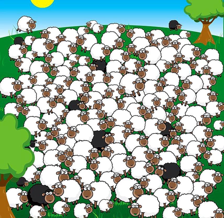 Találd meg az alvó bárányt és a kutyát! Ha nem sikerült, lapozz a közelebbi fotóért.