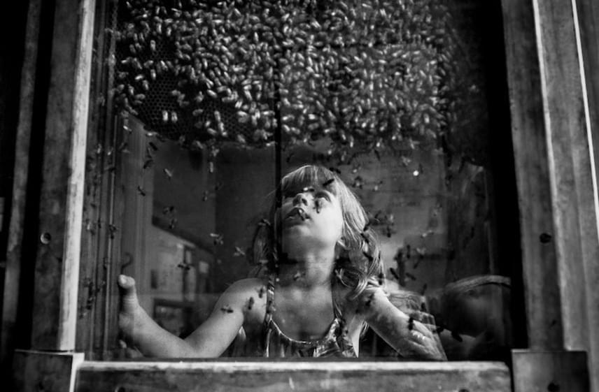 A gyermeki kíváncsiság már-már veszélyes részét mutatja meg az amerikai-lengyel Hutchins képe, a dokumentáció és utca kategóriában díjazott Királynő-keresés.