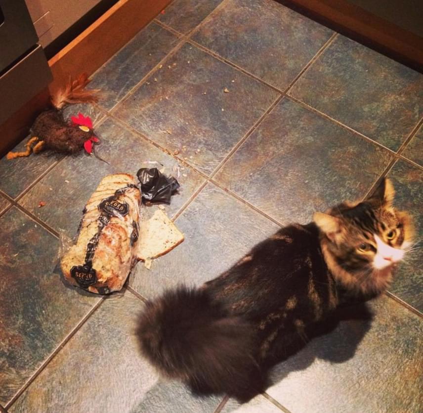 Volt azért olyan is, aki a titokzatos lakótárs védelmére kelt, mondván, valószínűleg csupán túl sok időt töltött el macskák jelenlétében, hogy kialakultak benne az ilyesfajta a problémamegoldási folyamatok - bizonyítva az állítást a saját cicája képével. Tény, hogy ez a fotó azért elég tipikus.