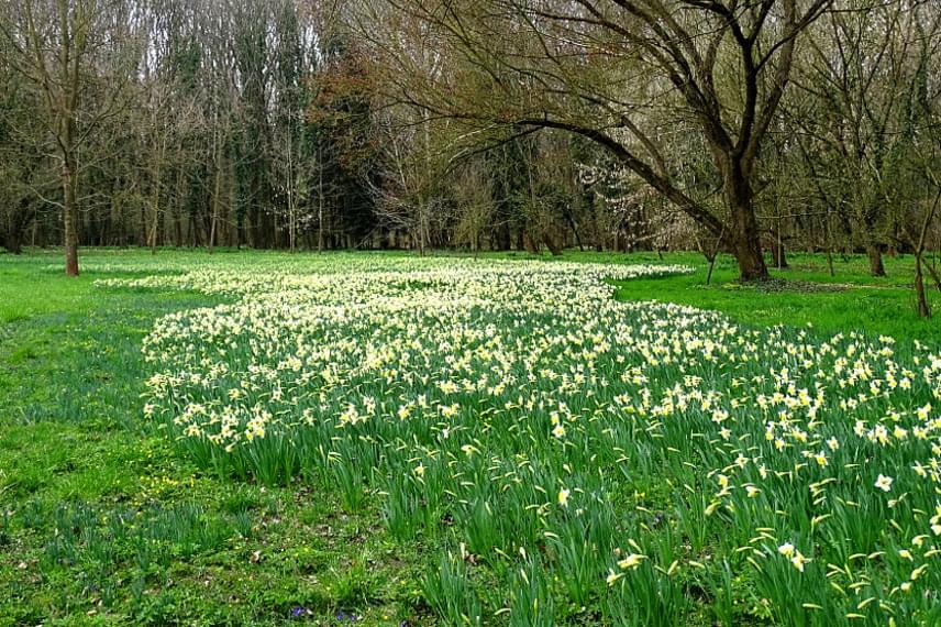 Az Alcsúti Arborétum főként hóvirágjairól nevezetes, ám ezek lassan elvirágoznak. A kertben azonban látványosságot látványosság követ: nem sokkal a hóvirágok után következik a mintegy 360 ezer hagymás növény virágzása, melynek során páratlan szépségű nárciszokat, krókuszokat és tulipánokat láthatsz.