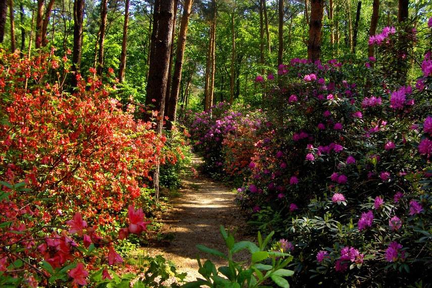 A Kám határában található Jeli Arborétum egyike Európa legszebb botanikus kertjeinek. A virágok már áprilisban elkezdik bontogatni a szirmaikat, májusban pedig teljes pompájában láthatod a rhododenronvirágzást, melynek során a virág mintegy háromszáz változatából több ezer példány egyszerre, bódító illattal nyílik.