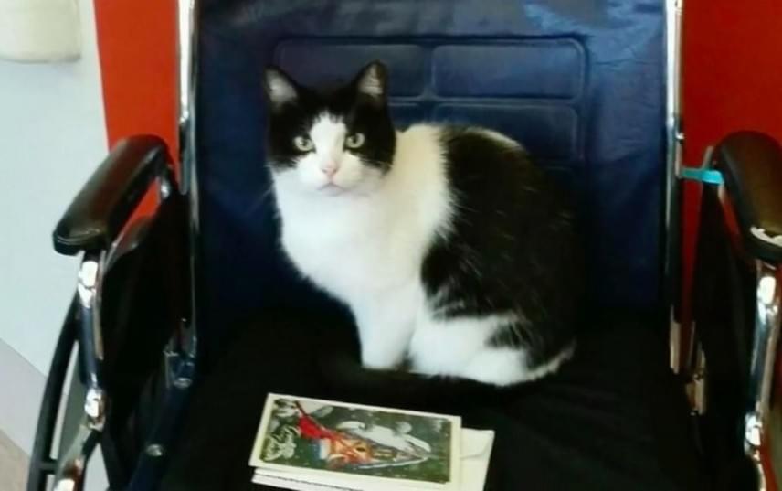 A tolószékben is szívesen üldögél Oreo, persze csak amikor talál szabad helyet.