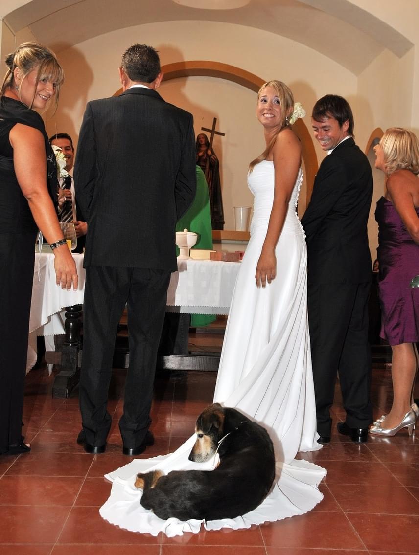 A kutyás párok a kedvencüket sem szeretik otthon hagyni a ceremóniáról. Ez a blöki megtalálta a házasságkötő-terem legkényelmesebb pontját.