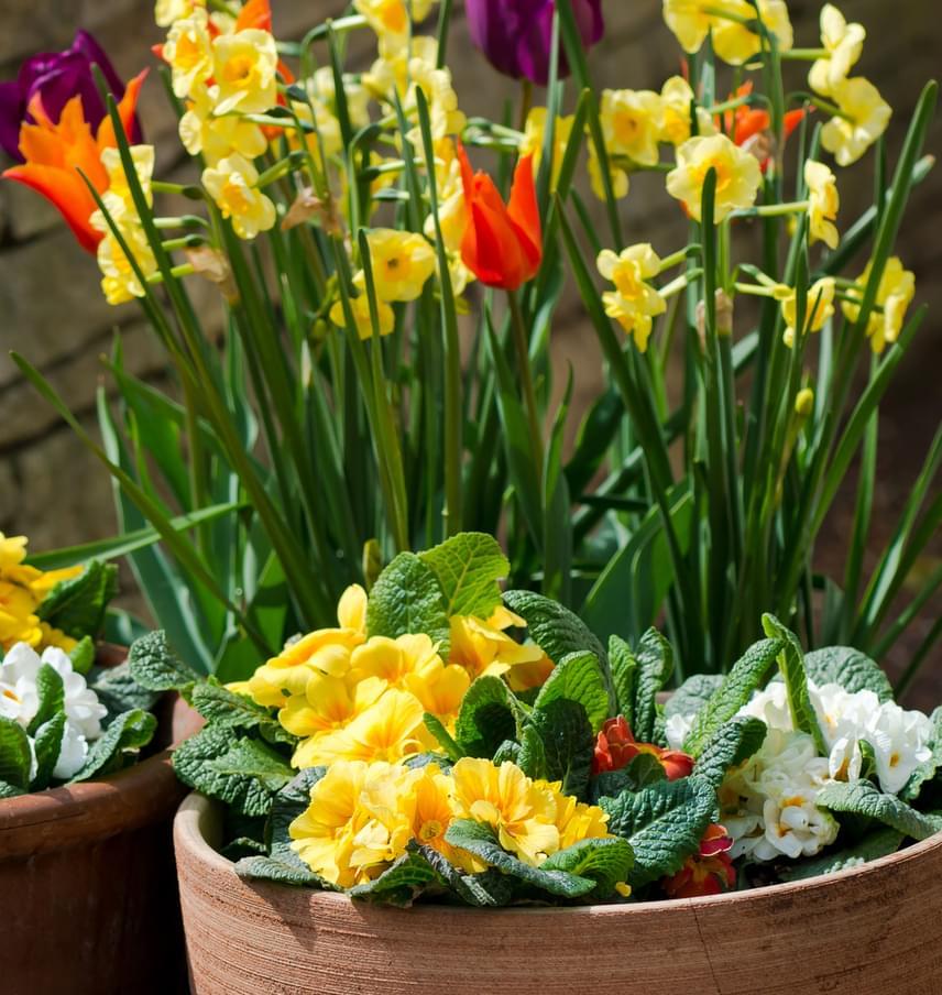 Az elnyílt virágokat mindig vágd le, így a növény még ép, egészséges részeinek több esélyük lesz tápanyaghoz jutni.
