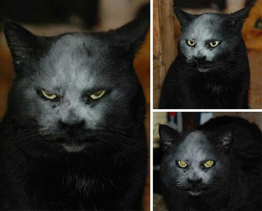 Semmi ördögi nincs ebben a képben: csak egy bosszús ábrázatú cica látványos találkozása a liszttel.