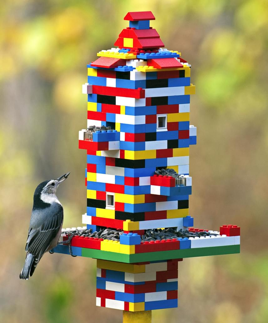 A színes, feltűnő madáretető még jobban vonzza majd az éhes madarakat.