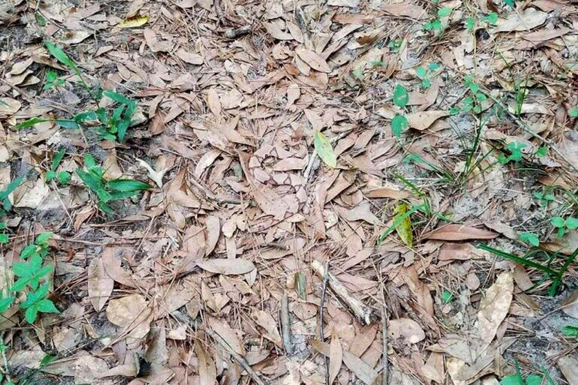 Hol rejtőzik a kígyó?