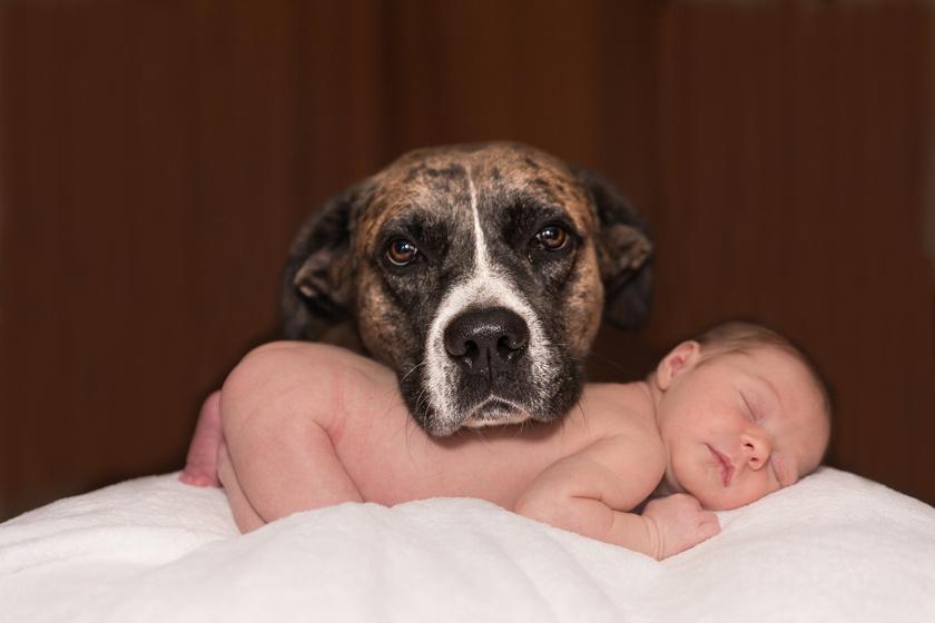 kutya-csecsemő