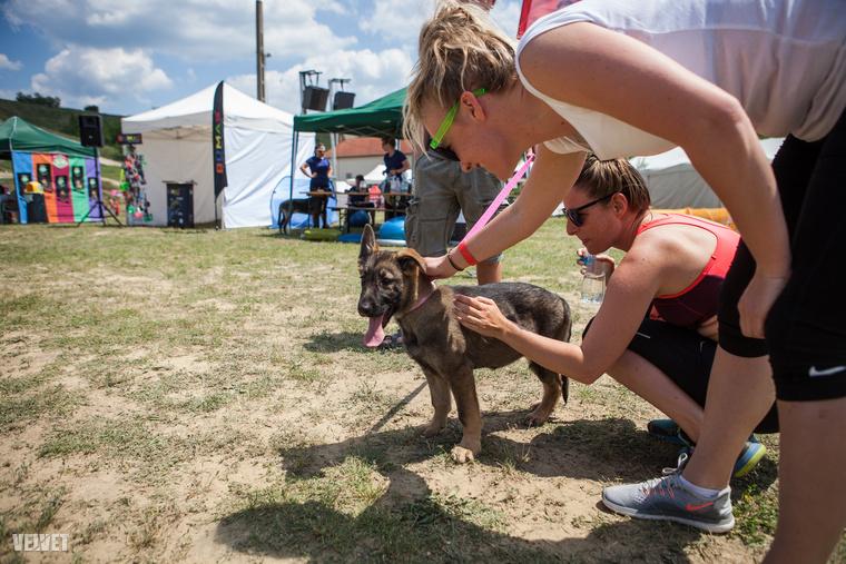 A Hard Dog Race-ről (HDR) tavaly azért írtunk, mert egy tök jó kezdeményezés, amin az ember a kutyájával feszegetheti a határait, és mert csapatban azok a speciális mentők győztek, akiknek a munkáját régóta követjük.