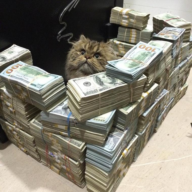 Meg az is, hogy macskájának bankókból épít várat.