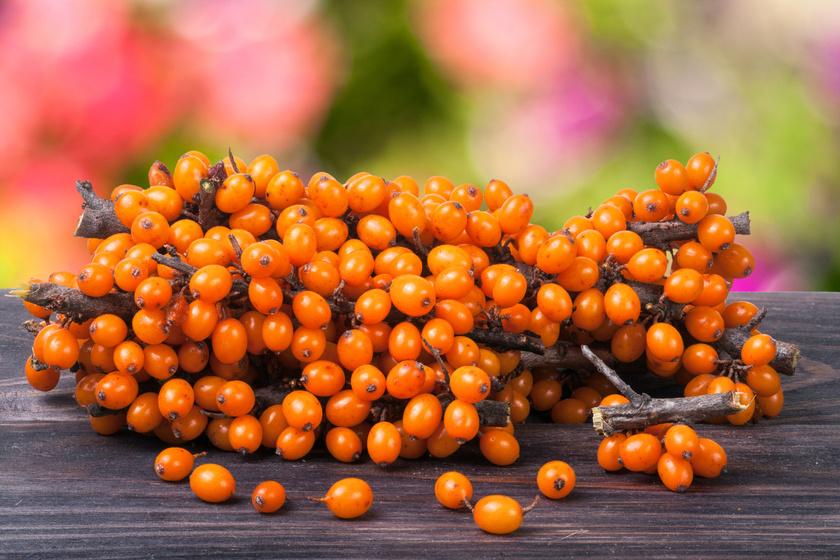 A homoktövis nagyon gazdag C-vitaminban, B1-, B2- és B6-vitaminban, kalciumban, vasban és cinkben. Aszalva és nyersen is érdemes fogyasztani.