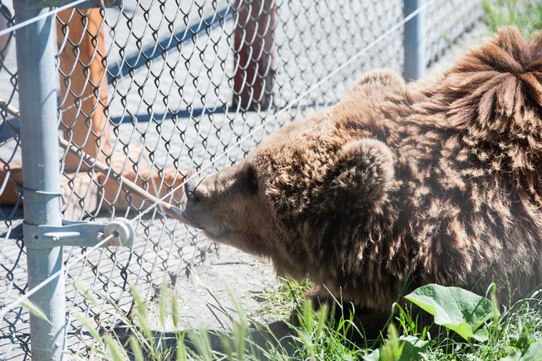 Ez után pedig csak el kell venni egyet a szabadon használható fakanalak közül, és már mehet is a medvék szeretetének megvásárolása.