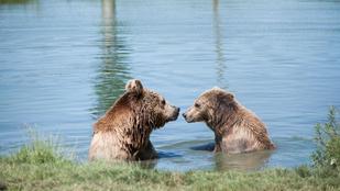 Egy hely Pest megyében, ahol meseszépek a tavak és kézből esznek a medvék