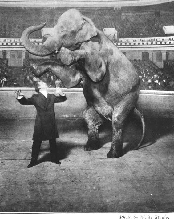 Houdini és Jennie, az Eltűnő Elefánt, 1918. jan. 7.
