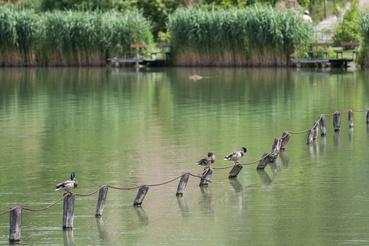 A bánki tó tökéletes elvonulós hely, akár hétköznap is.