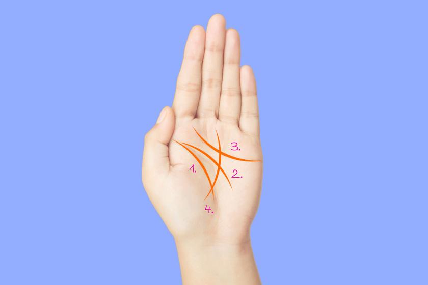 Először is ismerd meg tenyered fő vonalait: 1. életvonal, 2. szívvonal, 3. sorsvonal, 4. életvonal.