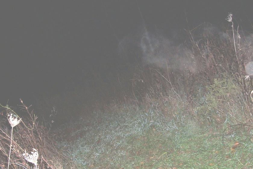 Néhány barát a missouri King Hill temetőben készített felvételeket. Bár a helyszínen semmit nem láttak, a fotón egy ködszerű alakot vettek észre, akiről úgy vélik, a temető síró boszorkánya, Nancy Hawley lehet.