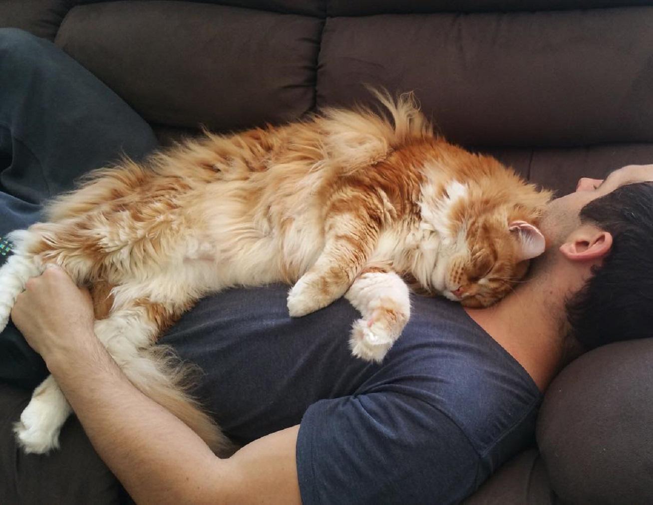 macska-ember-nagy