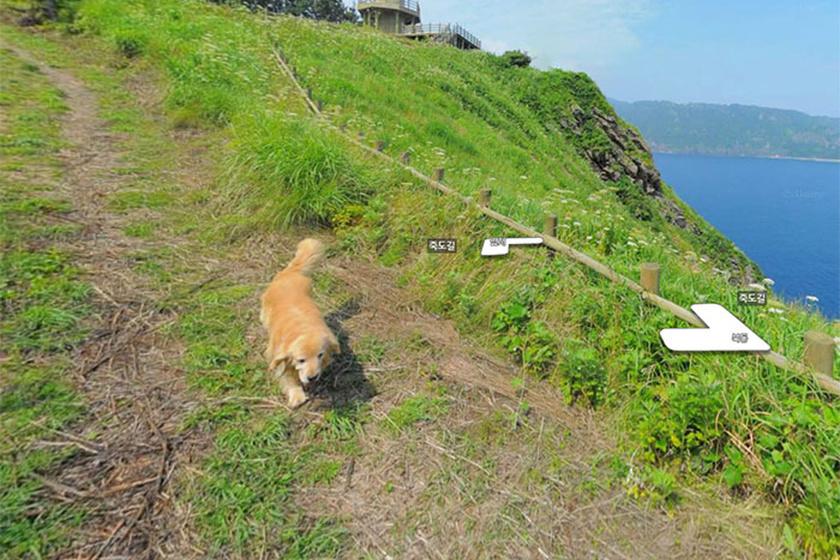 kutya-hegy