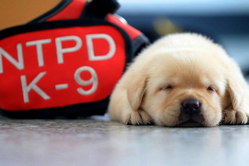 kutya-alszik