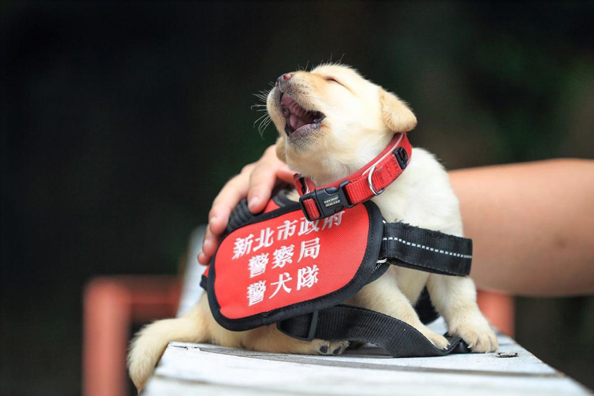 kutya-felszereles