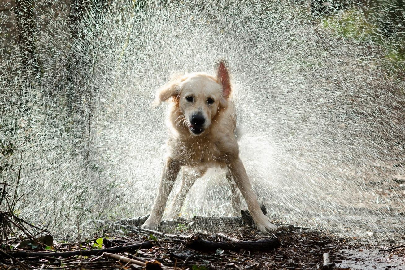 kutya-vizes