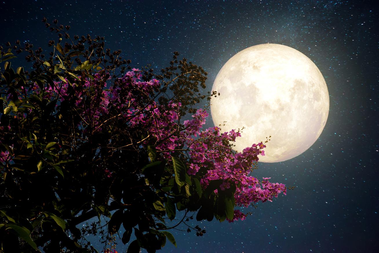 A Hold ciklusai | Varázslat-faktor, Újhold fogyás varázslatok